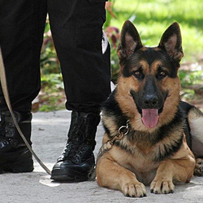 Los perros en la seguridad privada