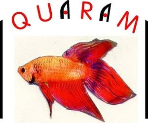 Tiendas de animales en Bilbao | Aquarama