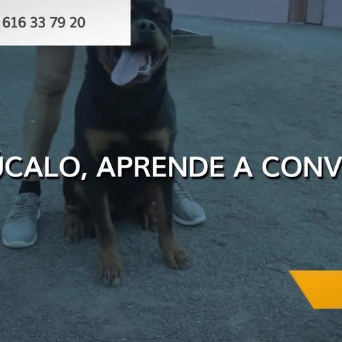 Adiestrador de perros en Las Palmas de Gran Canaria