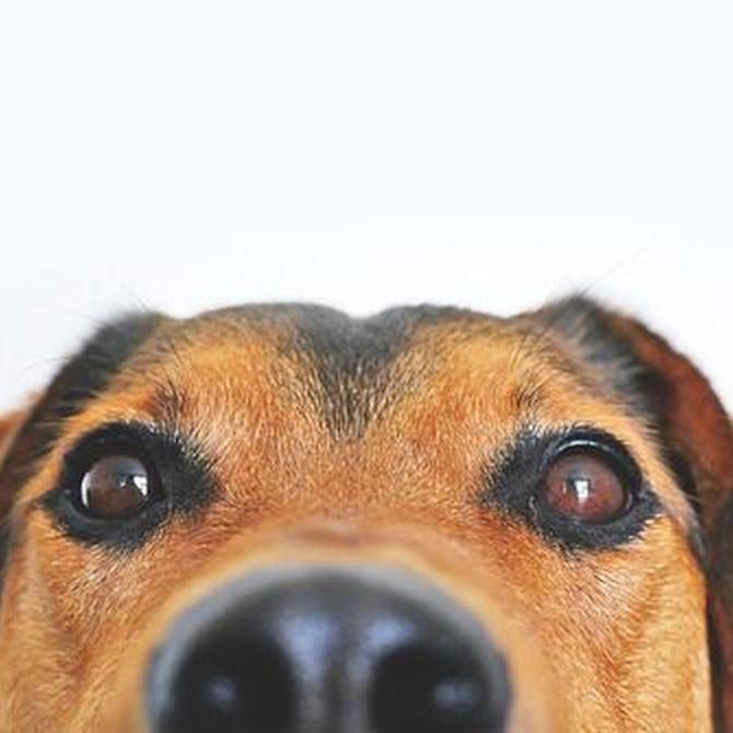 Haz feliz a tu perro dejando que olfatee