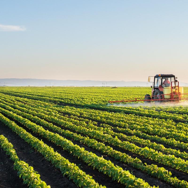 Tratamientos fitosanitarios: Servicios de AGROManchuela