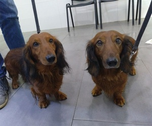 Clínica veterinaria en Llíria, Valencia