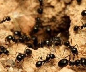 Fumigación para la eliminación de hormigas