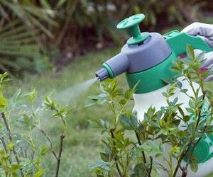 Cuidado de las plantas y antiplagas