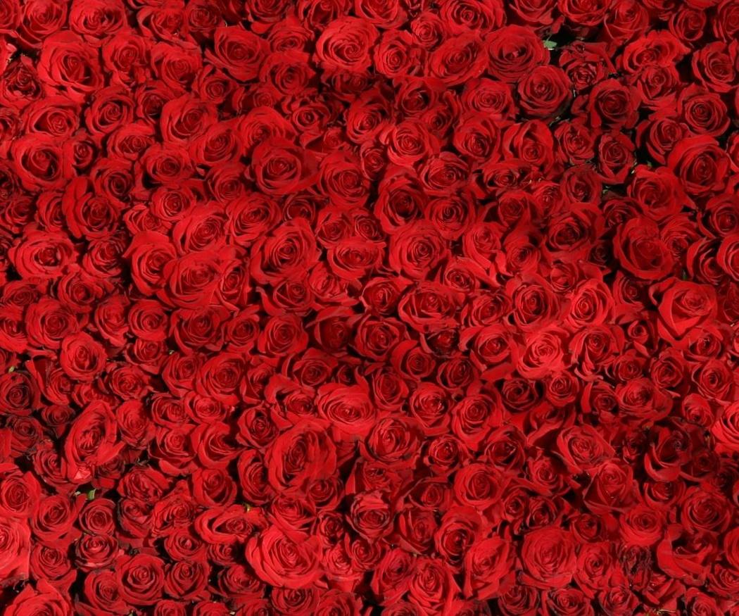 ¿Qué flores regalo en San Valentín?