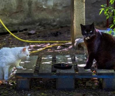 Los gatos callejeros, ¿una nueva plaga?
