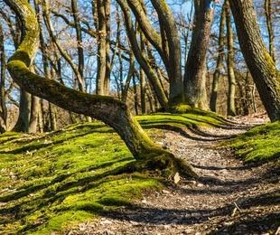 El estado de los bosques en España