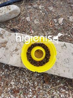Eliminar plaga de avispas en jardín