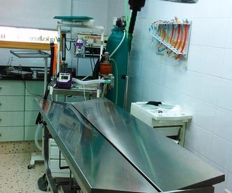 Medicina interna: Nuestros Servicios de Clínica Veterinaria Sant Marc