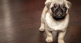 Los mejores consejos para cuidar a tu primer perro