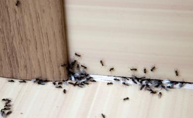 Plagas de insectos en Albacete