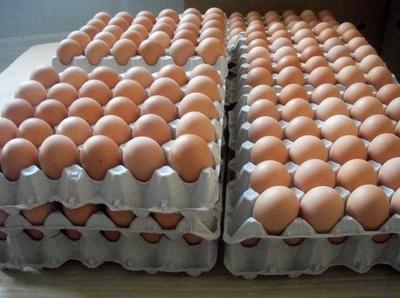 Huevos Frescos: Huevos Cañavate