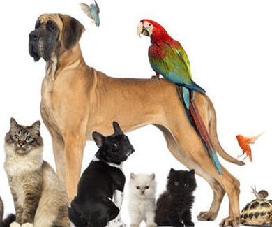 EL beneficio que aportan nuestras mascotas