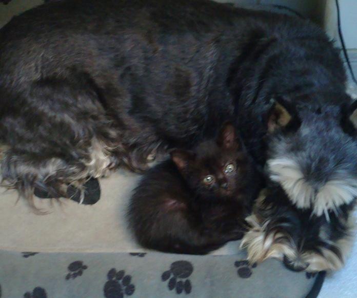 Mascotas: Servicios de Clínica Veterinaria San Lucas
