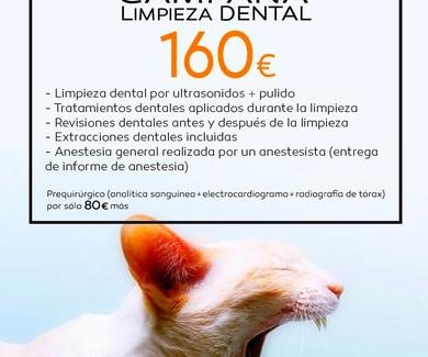 Campañas veterinarias