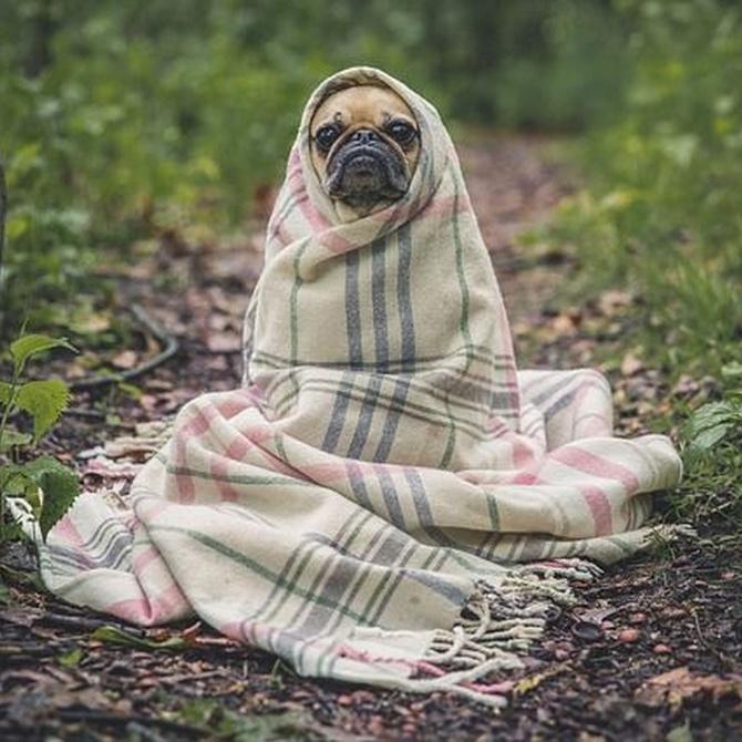 Prevenir enfermedades y mejorar calidad de vida con tu mascota