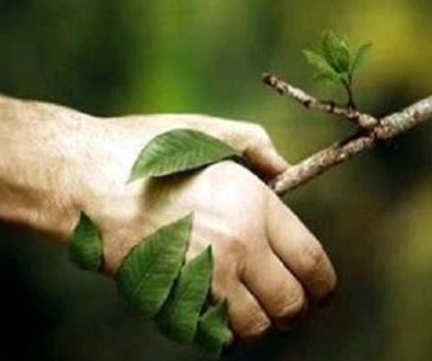 40 CONSEJOS PARA PODAR CORRECTAMENTE LAS PLANTAS