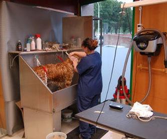 Laboratorio de Análisis Clínicos: Productos y servicios  de C.Vet.Mon Animal Berga