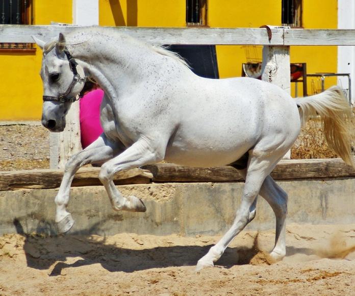 Pupilaje de caballos: Servicios de Hípica Riding School