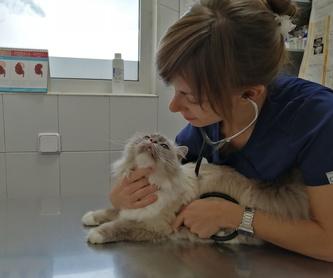 Especialidades Veterinarias: Servicios veterinarios de Clínica Veterinaria Leganés Norte