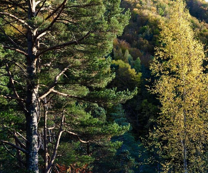 otoño en Torla-Ordesa
