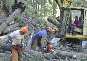 Explotaciones forestales
