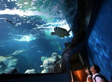 Compra tus entradas para el acuario de Gijón