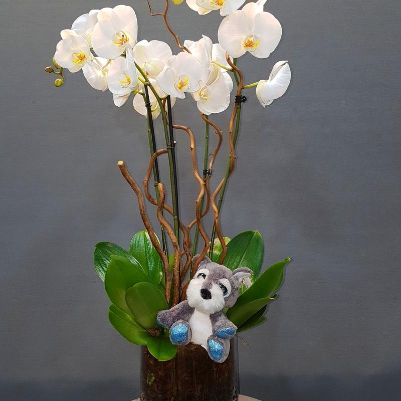 centro orquideas : Productos de Flores Madrid