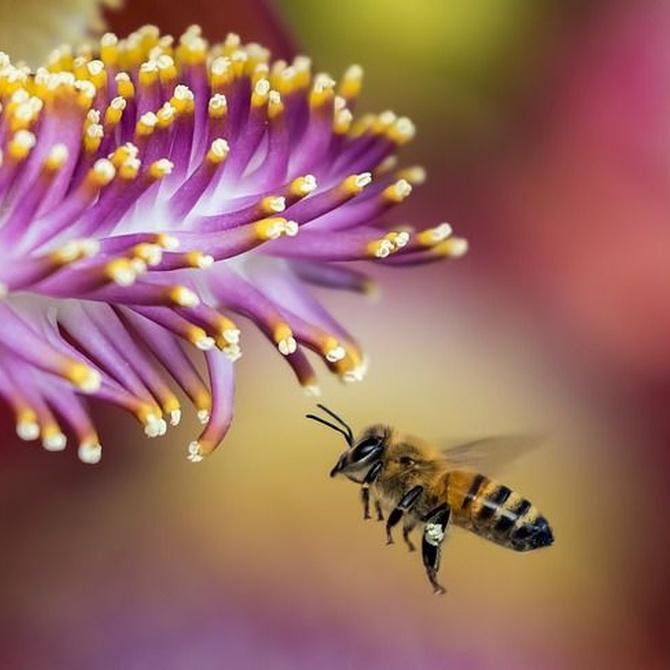 Insectos amigos para nuestro jardín