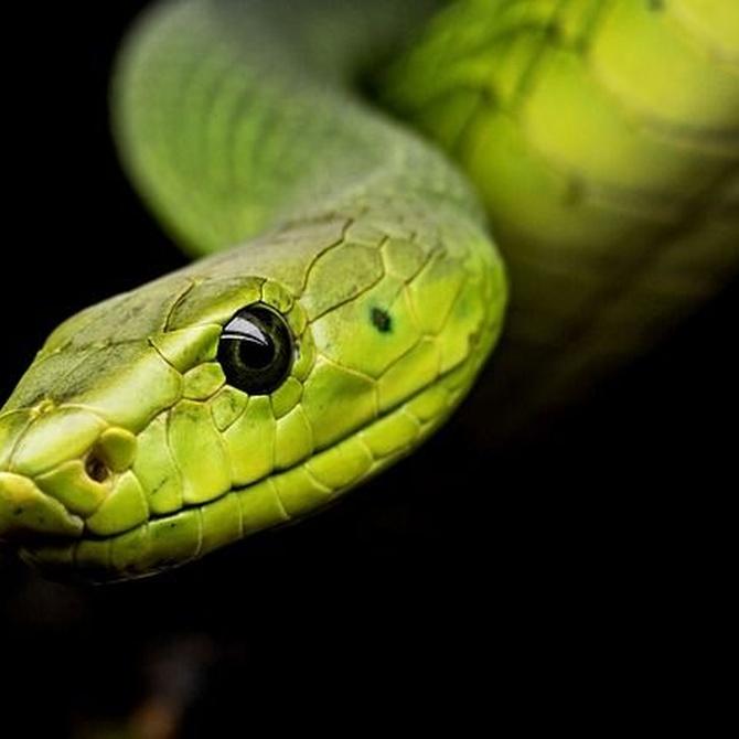 Serpientes, ¿son peligrosas en casa?