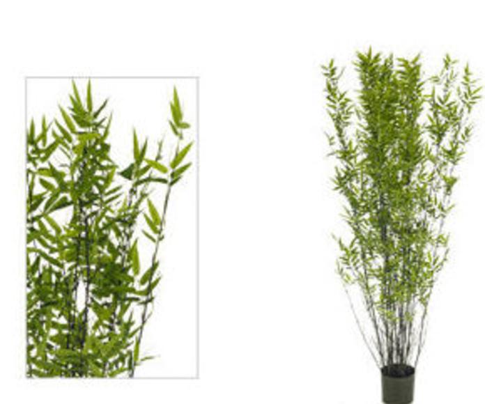 Árbol bambú oriental black 195cm