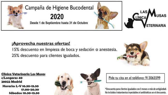 Higiene bucodental: Peluqueria Canina y Felina  de Clínica Veterinaria Las Musas