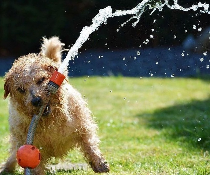 resfrescar a los perros en verano