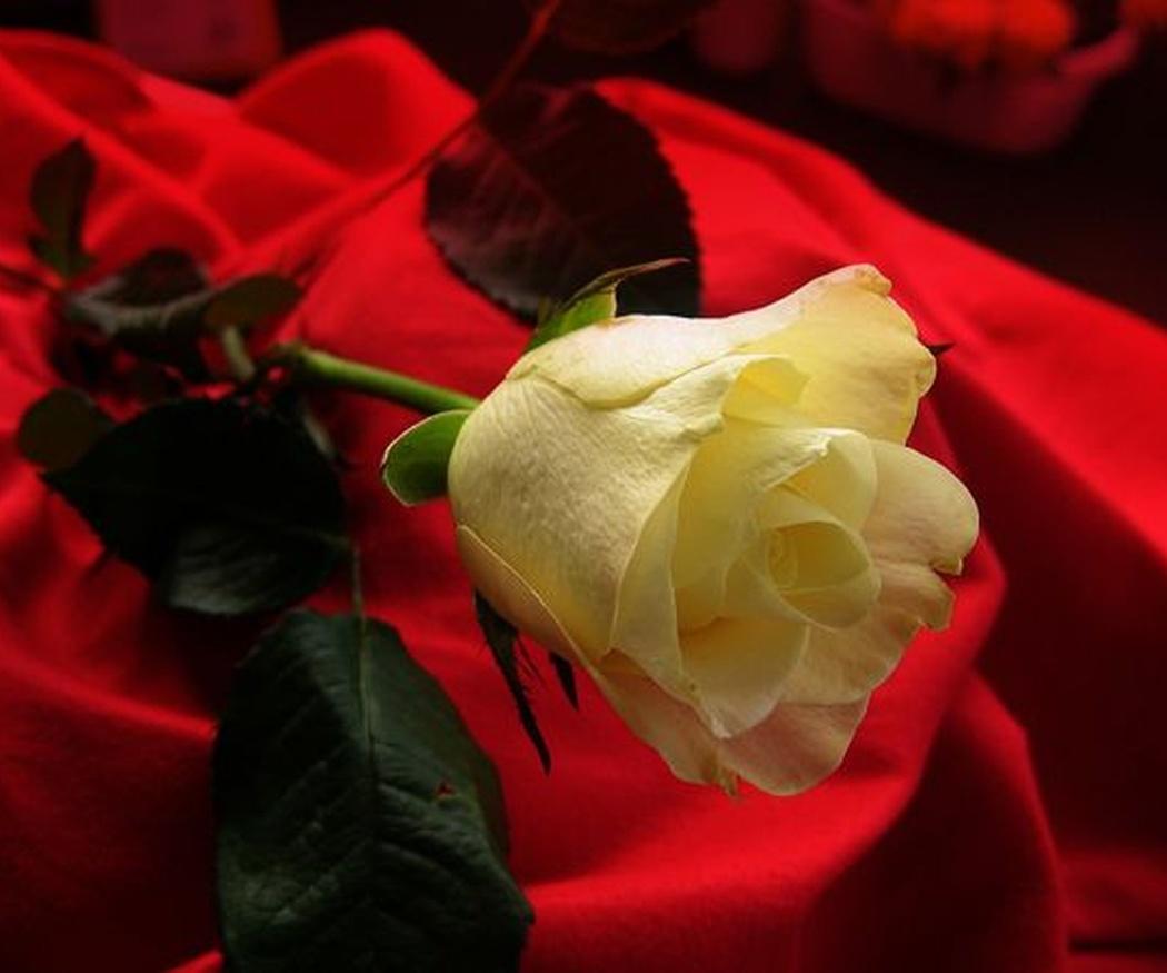 El regalo de flores