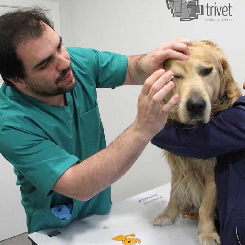 Oftalmología: Servicios de Centro Veterinario Trivet