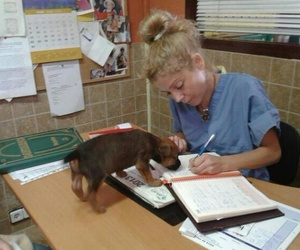 Medicina interna veterinaria