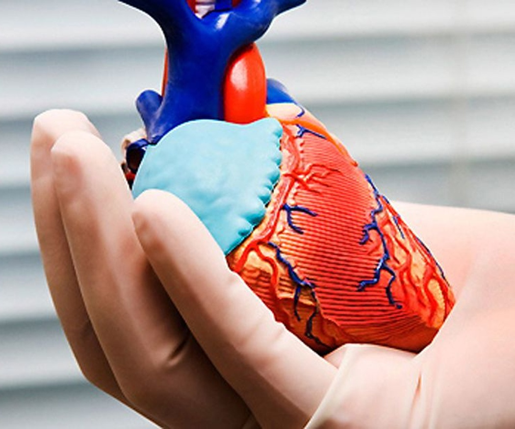El transporte de órganos y tejidos