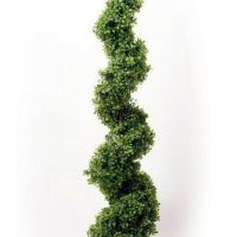 árbol boj espiral