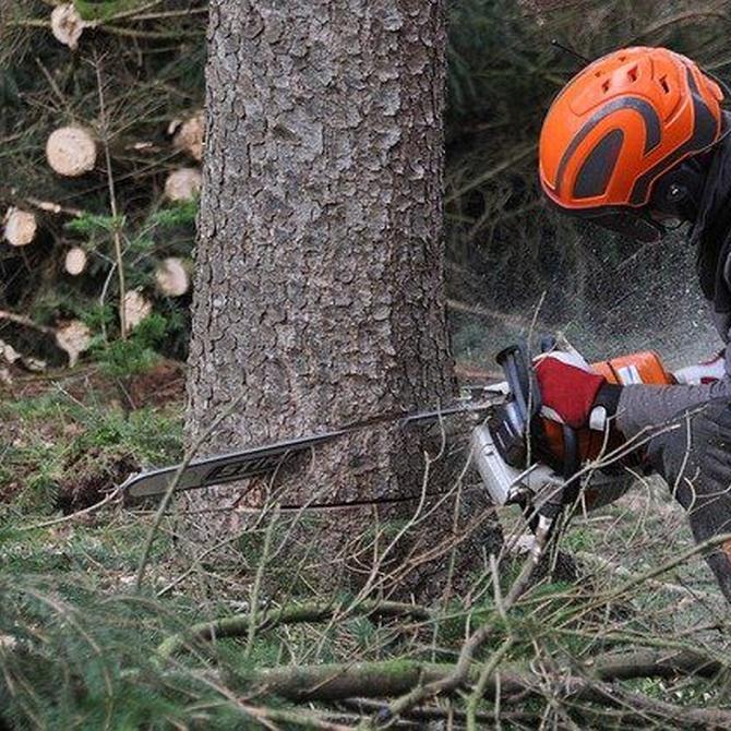 Casos en los que es necesario talar un árbol