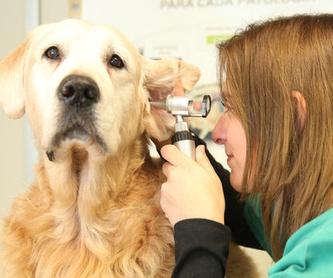 Dermatología: Servicios de Animalvet