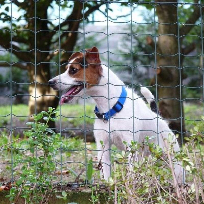 Alimentación: Servicios de Errekagane Residencia Canina