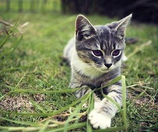 Consejos para cuidar a tu gato