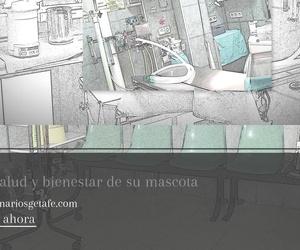 Cirugía veterinaria en Getafe | Clínica Veterinaria Getafe
