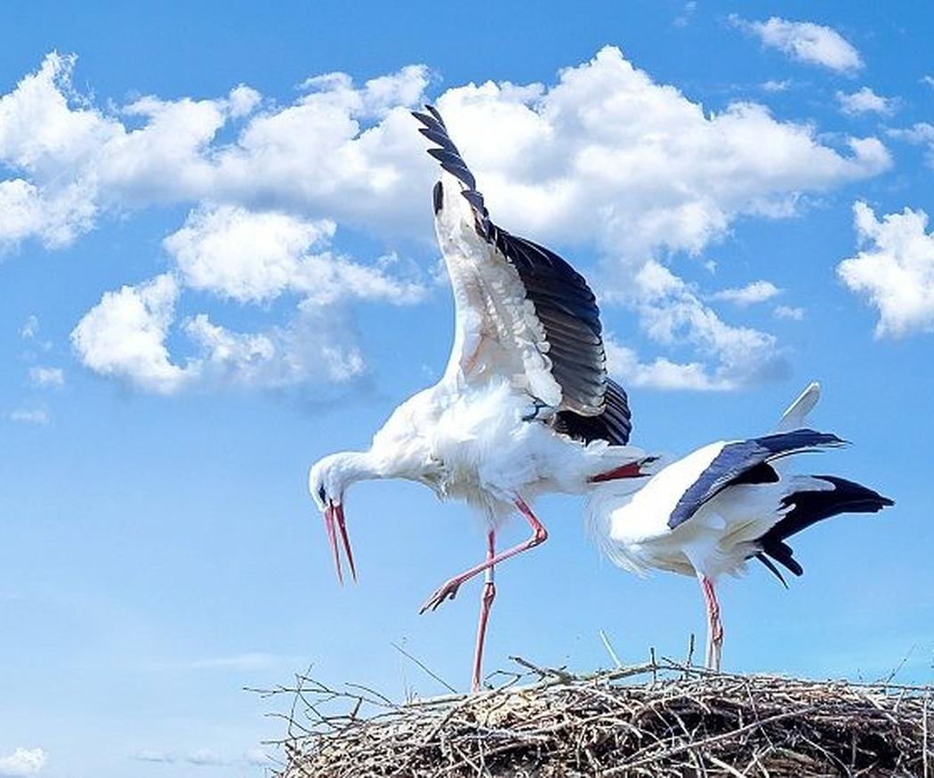 Sistemas anti aves para controlar la superpoblación de cigüeñas