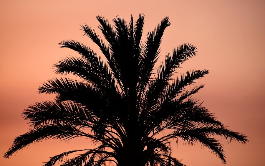 Cómo cuidar tus palmeras en otoño