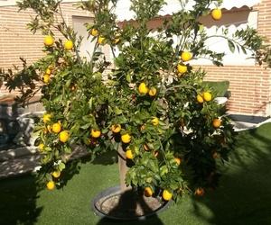Riego automático en su jardín: con difusores