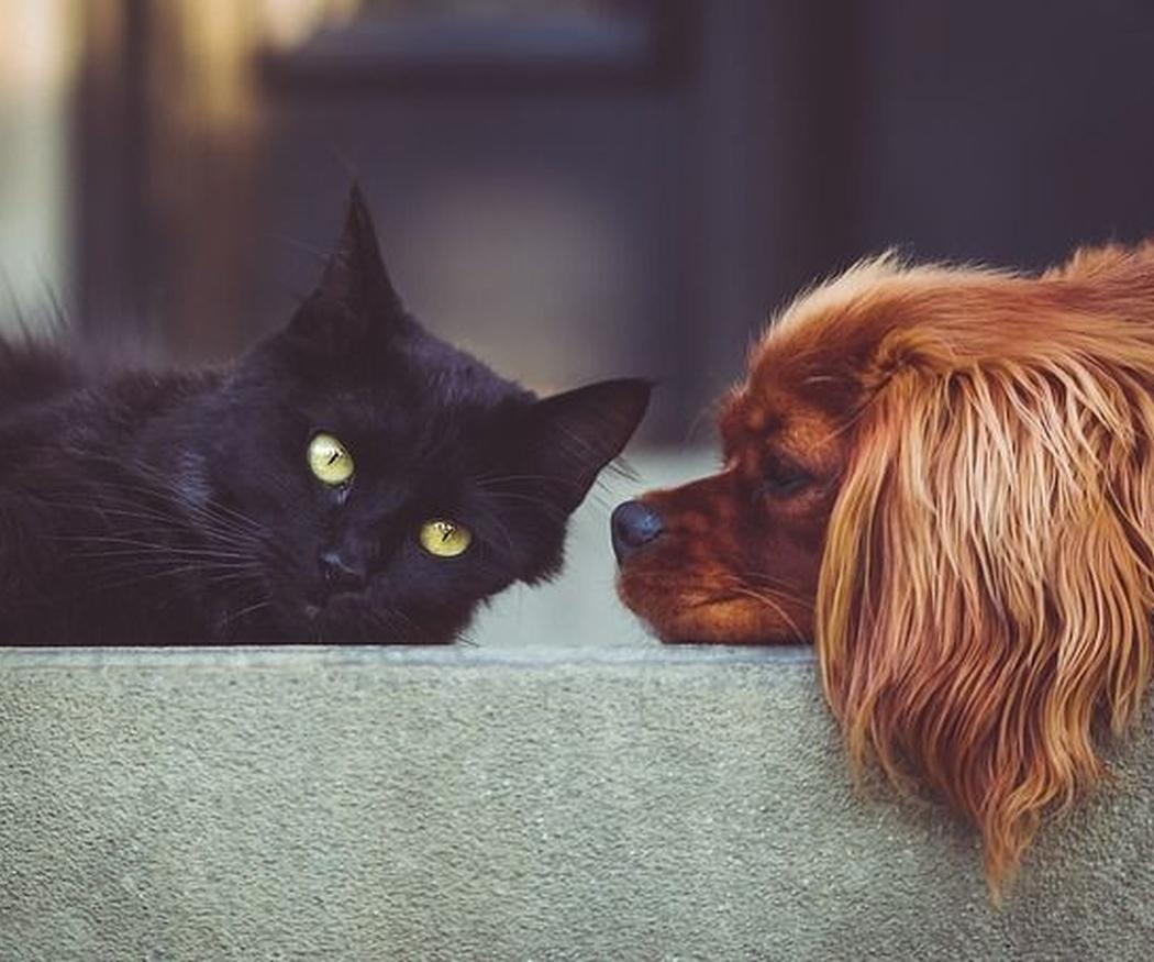 ¿Pueden las mascotas convertirse en herederas?