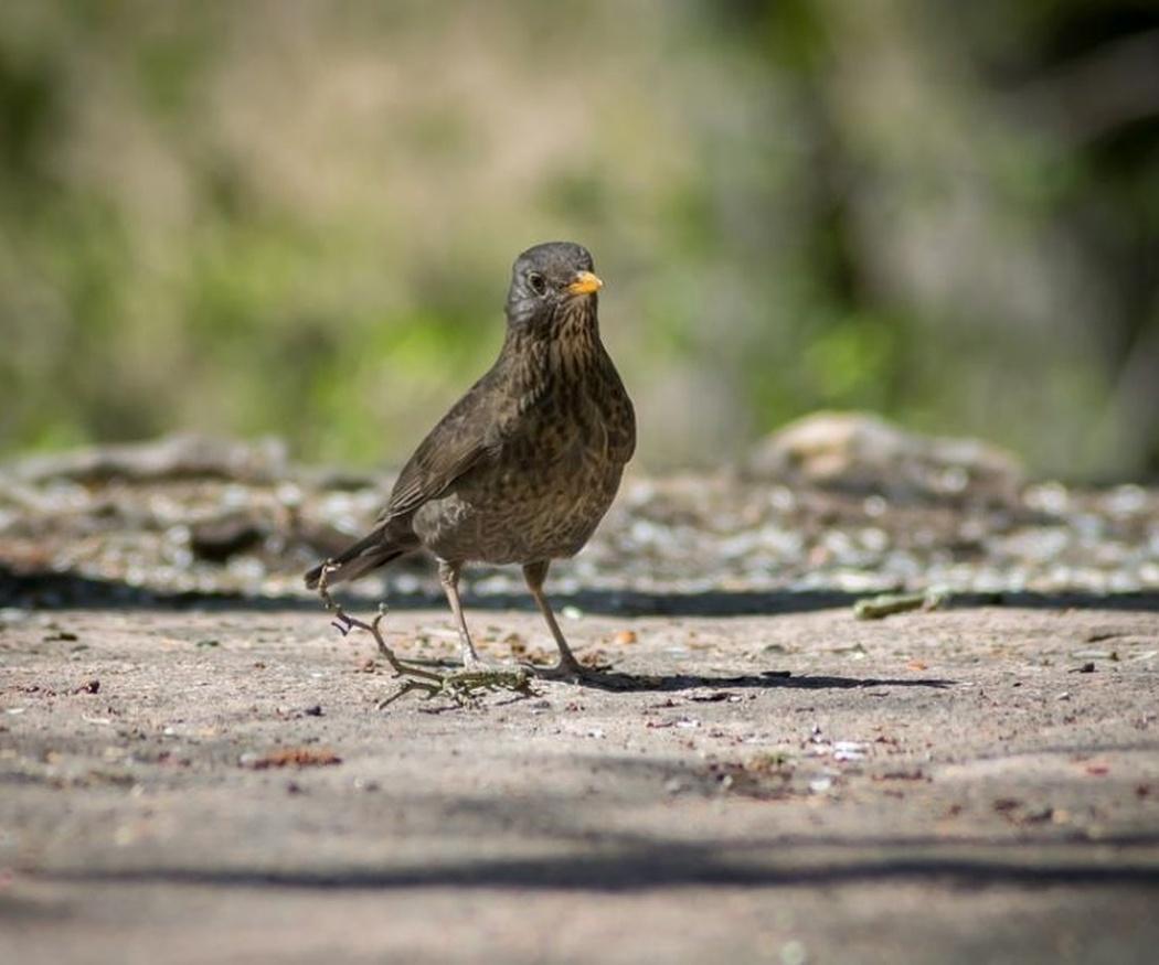 La manera de evitar que los pájaros urbanos sufran demasiado las olas de calor