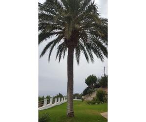 Mantenimiento de palmeras en Granada