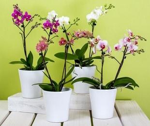 Beneficios de poner plantas en casa